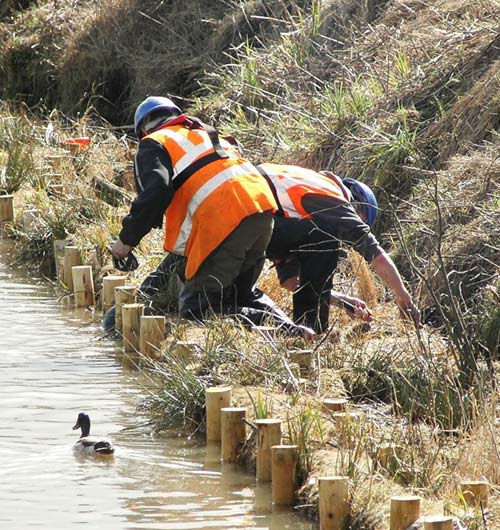 Canals and rivers bank stabilisation