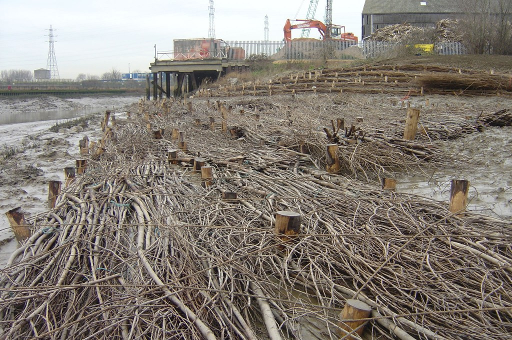 Brushwood Faggots staked in place to accrete sediment