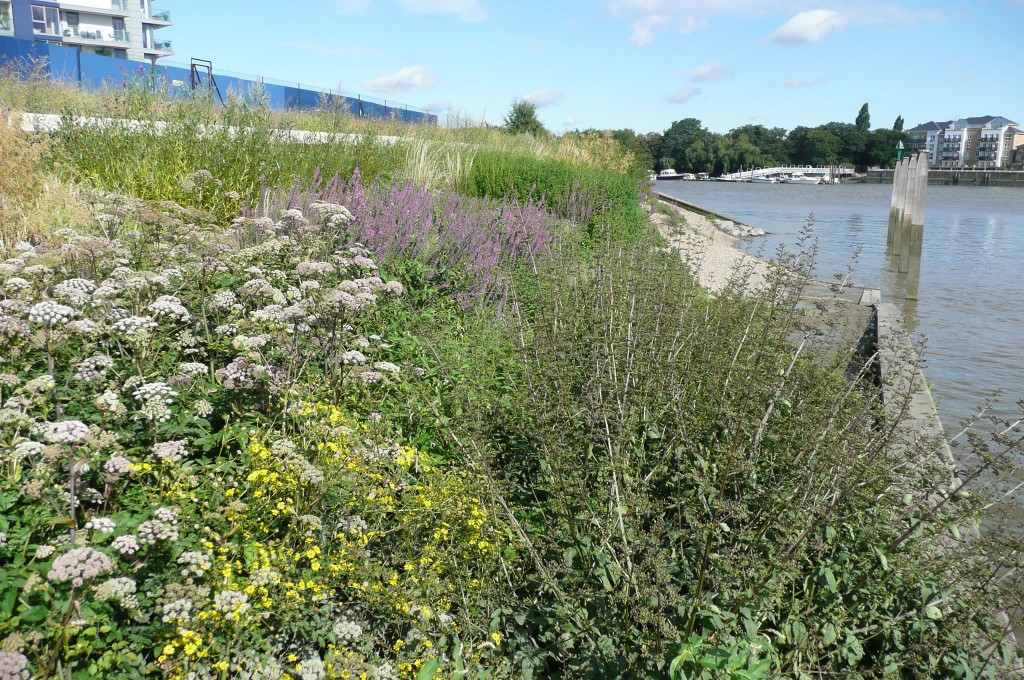 Plug Planting River Thames 1 year later
