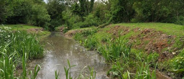 Completed site with new wetland planting