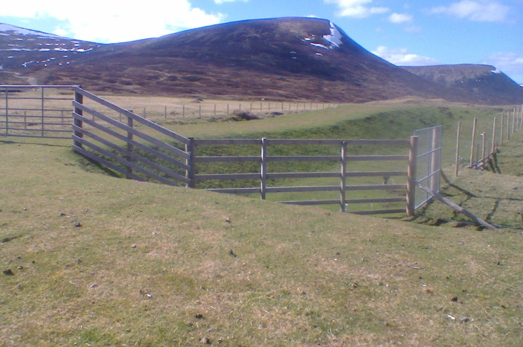 Loch Garry spillway protection with good grass establishment through the VMax P550