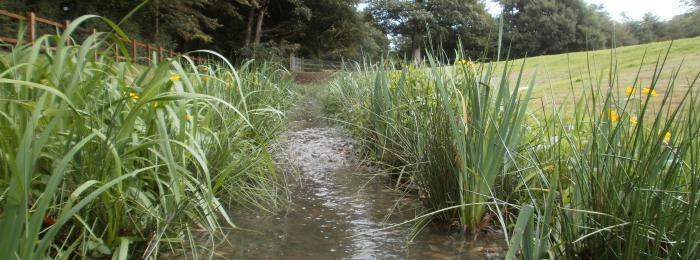Worden Park Brook