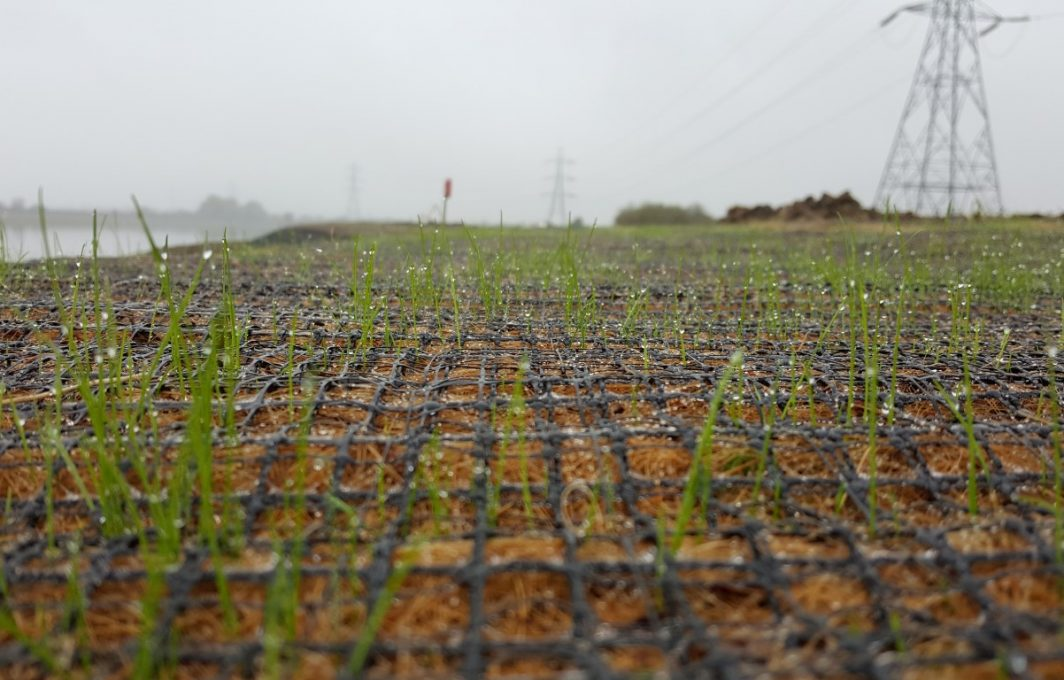 Early germination of grass seed through VMax C350