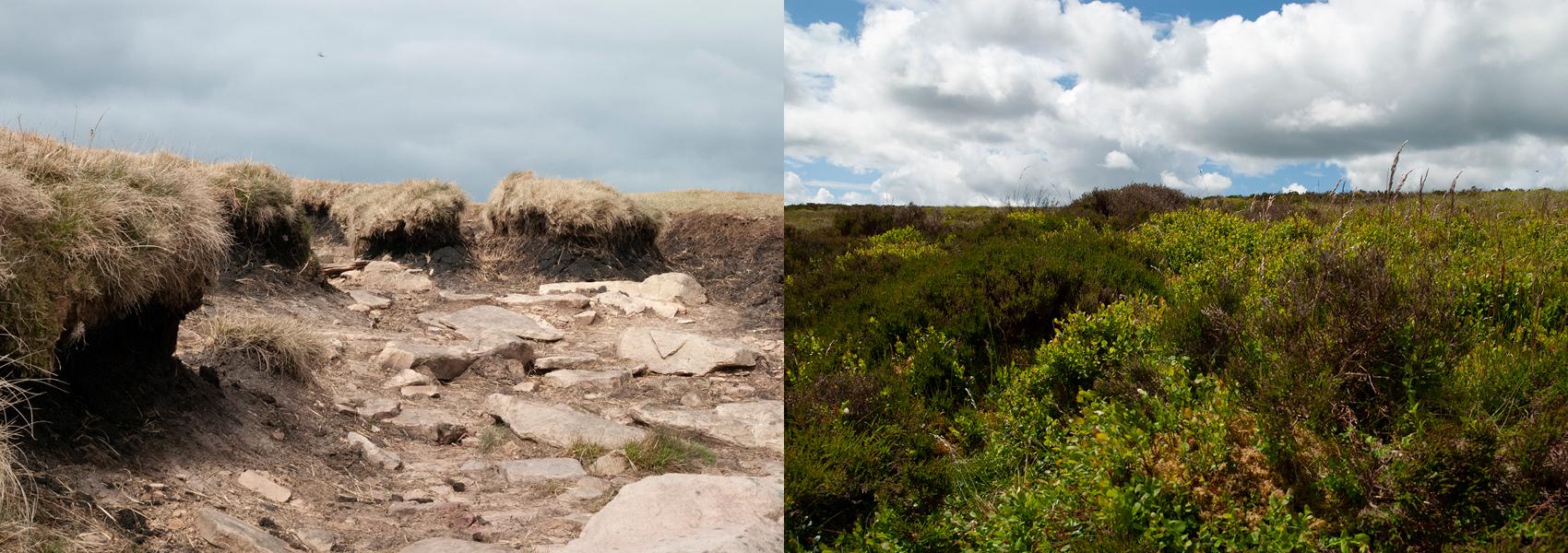 Damaged peat bog versus a healthy peat bog.