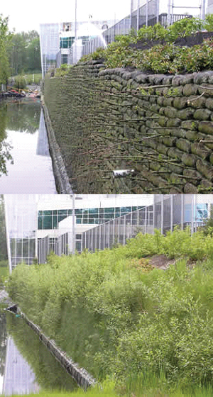 FlexMse vegetated retaining wall system before and after once vegetated